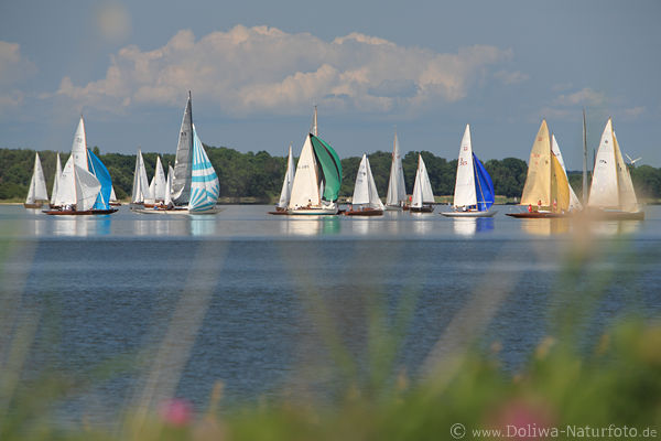 Sail water-race boats skyline over lake nature shores