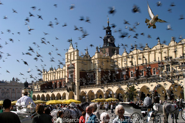 Flying pigeons of Cracow town hall city market picture with people on trade-foyer arcades